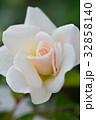 バラ 花 薔薇の写真 32858140