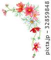 花 植物 コスモスのイラスト 32859848