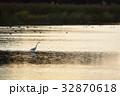 ダイサギ 野鳥 夕暮れの写真 32870618