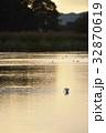 ダイサギ 野鳥 夕暮れの写真 32870619