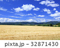 大麦畑 麦畑 上富良野の写真 32871430