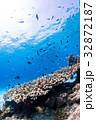 サンゴ 魚 海の写真 32872187