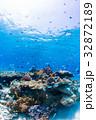 サンゴ 魚 海の写真 32872189
