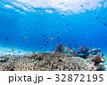 サンゴ 魚 海の写真 32872195