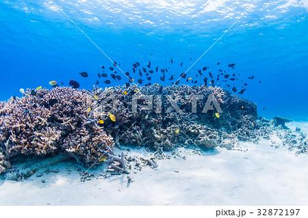 サンゴ礁に住む魚たち 沖縄県・慶良間諸島・座間味の海 32872197