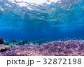 紫色のサンゴ礁 沖縄県・慶良間諸島・座間味の海 32872198