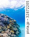 サンゴ礁 魚 海の写真 32872205