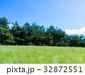 林 草原 森の写真 32872551