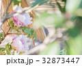 牡丹 花 冬牡丹の写真 32873447