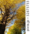 青空と黄葉と化した公孫樹 32873733
