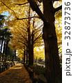 公孫樹の落ち葉に覆われた歩道 32873736