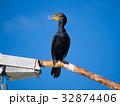 Double-Crested Cormorant on Rusty Street Light 32874406