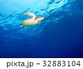 海亀と青い海 32883104