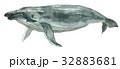 海 ブルー 青のイラスト 32883681