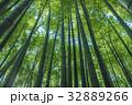 竹林 竹 竹藪の写真 32889266