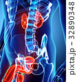 3D illustration of Urinary System, medical concept 32890348