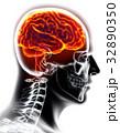 Human Internal Organic - Brain. 32890350