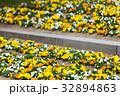 パンジー 花 植物の写真 32894863