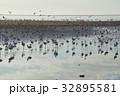 ウォルビスベイ フラミンゴ 群れの写真 32895581