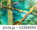 北海道 神の子池 秋の写真 32898060