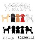 犬 プードル グループのイラスト 32899118