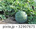 スイカ栽培 32907675