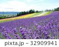 富良野 丘 花畑の写真 32909941