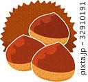 毬栗 秋の味覚 木の実のイラスト 32910191