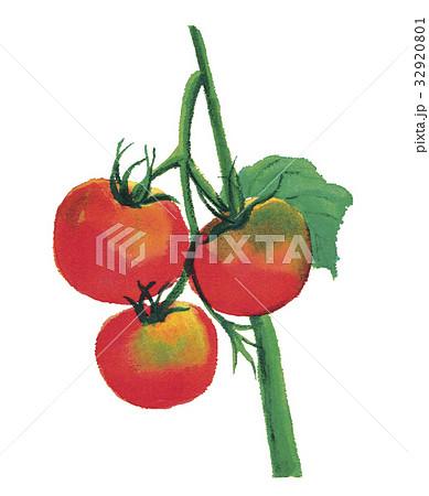 トマト 32920801