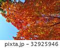 紅葉 秋 葉の写真 32925946