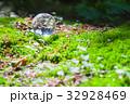 エコ エコロジー 新緑の写真 32928469