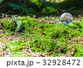 エコ エコロジー 新緑の写真 32928472