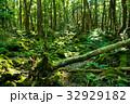 樹海 森林 森の写真 32929182