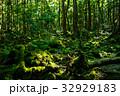 樹海 森林 森の写真 32929183