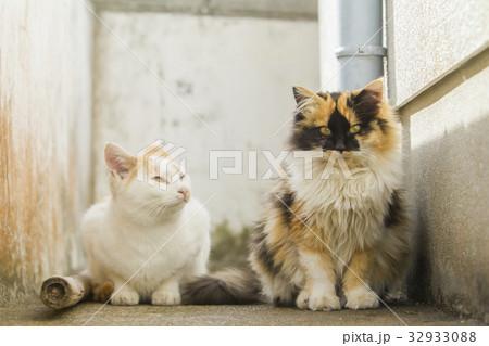 猫 32933088