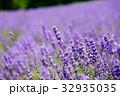 ラベンダー 花 植物の写真 32935035