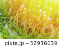 Dew drops on bright green grass with sun flare 32936039