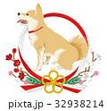 犬 柴犬 水引きのイラスト 32938214