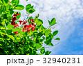 新緑 植物 自然の写真 32940231