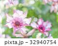 春の花 ピンク 花の写真 32940754