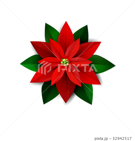 Poinsettia flower, symbol of Christmasのイラスト素材 [32942517] - PIXTA