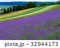 ラベンダー ファーム富田 花畑の写真 32944173