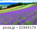 ラベンダー ファーム富田 花畑の写真 32944174