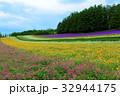 ラベンダー ファーム富田 花畑の写真 32944175