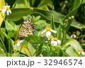 夏 サマーイメージ 夏イメージの写真 32946574