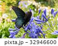 夏 サマーイメージ 夏イメージの写真 32946600
