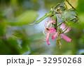 花 お花 フラワーの写真 32950268