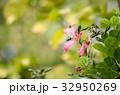 花 お花 フラワーの写真 32950269