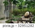 中国 四川 成都 パンダ基地 パンダ 32951282