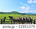 青空 北海道 サラブレッドの写真 32951370